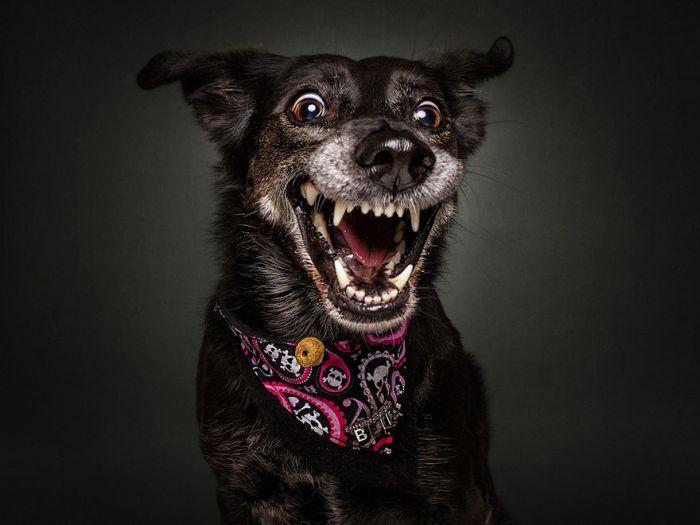 dogs_catching_treats_04