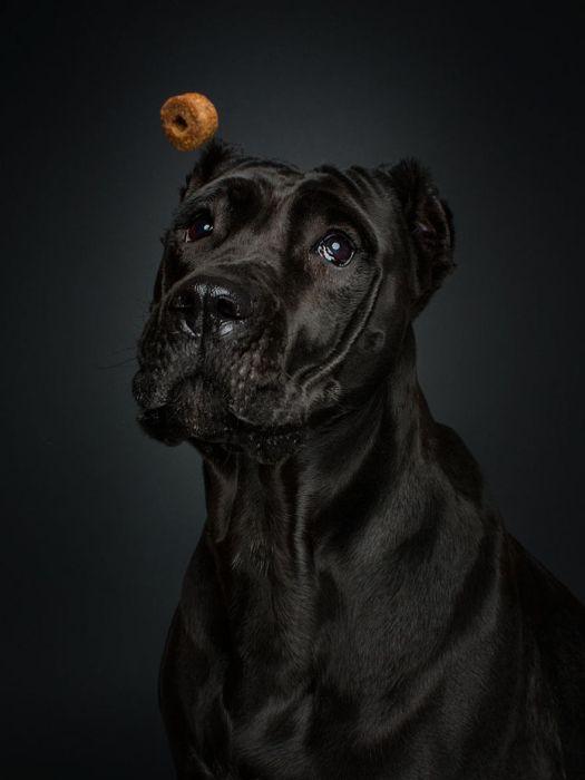 dogs_catching_treats_05