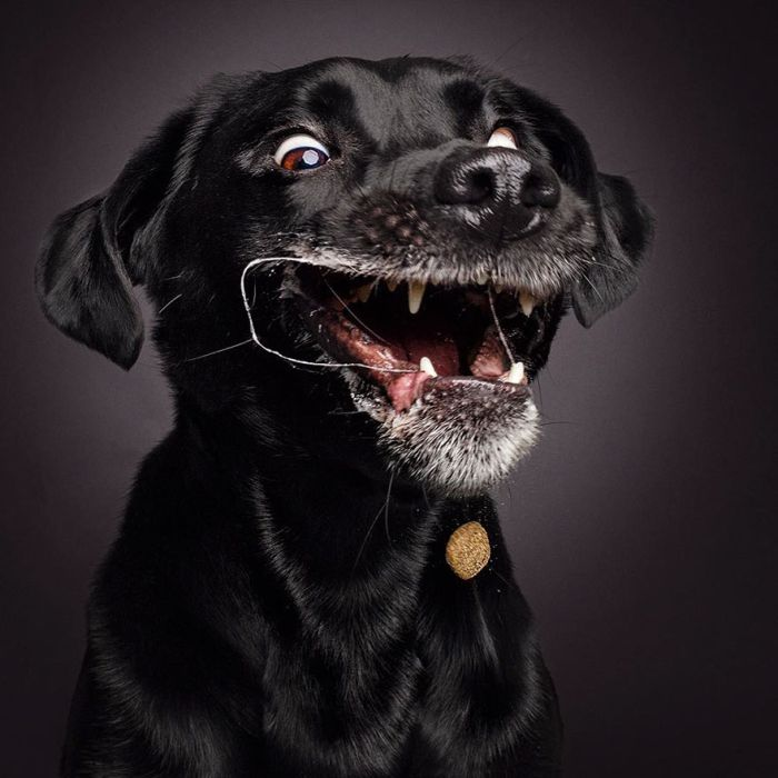 dogs_catching_treats_14