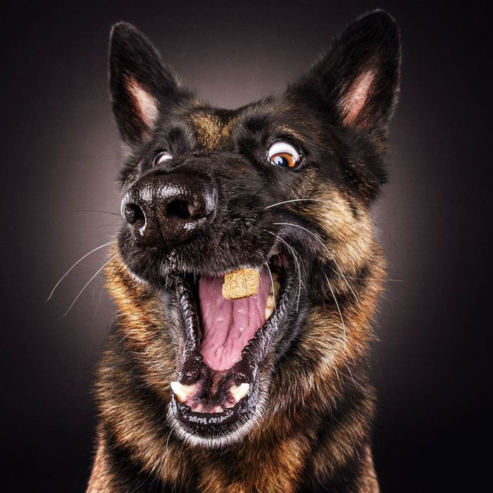 dogs_catching_treats_17