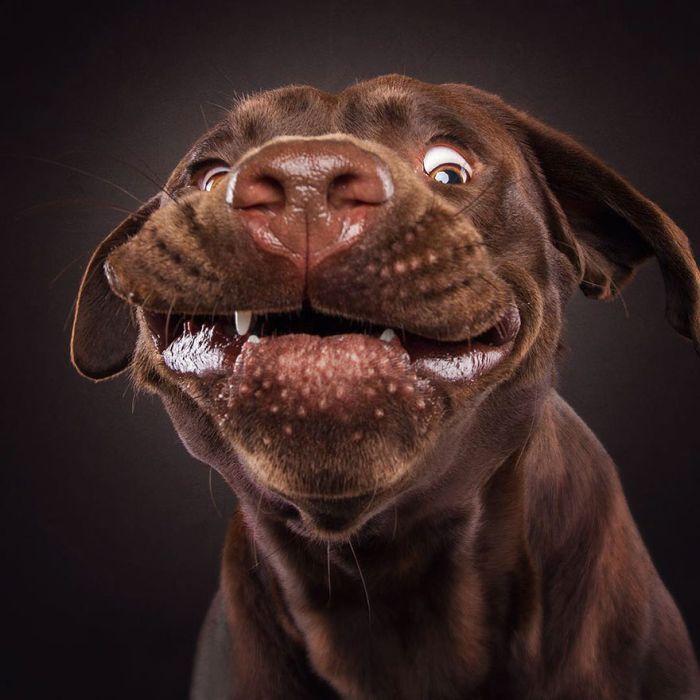 dogs_catching_treats_21
