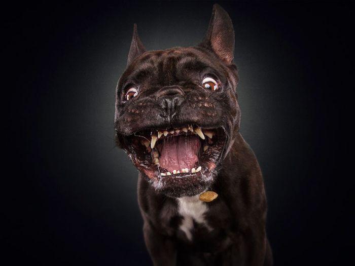 dogs_catching_treats_28